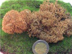 Basic Brown Moss