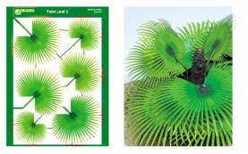 Multi-Scale Palm Fan Leaves (Colored Paper)