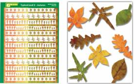 Multi-Scale Typical Autumn Yellow-Red Large Leaves (Colored Paper)