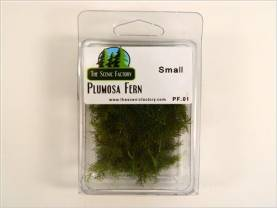 Plumosa/Asparagus Fern - Small Package