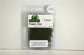 Plumosa/Asparagus Fern (X-small) - Small Package