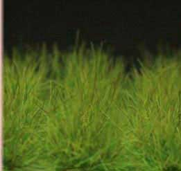 Grass Tuffs- Tuffs Green Extra Long Wild Grass Tufts