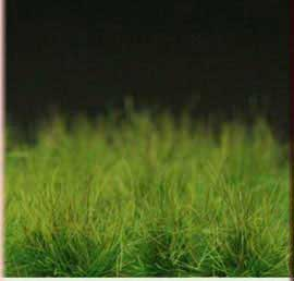 Grass Tuffs- Tuffs Dark Green Extra Long Wild Grass Tufts
