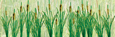 Cattails - Large (24 per pkg)