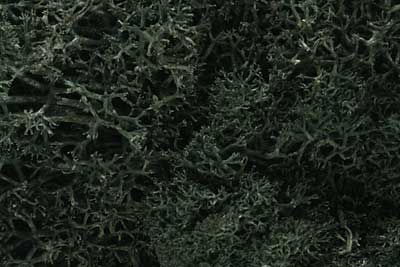 Lichen - Dark Green