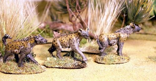 North Star Africa - Spotted Hyena (3)